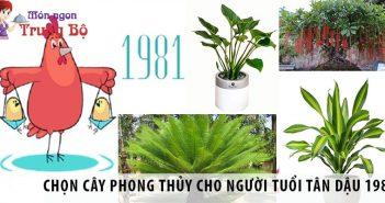 Cách chọn cây phong thủy cho tuổi Tân Dậu 1981