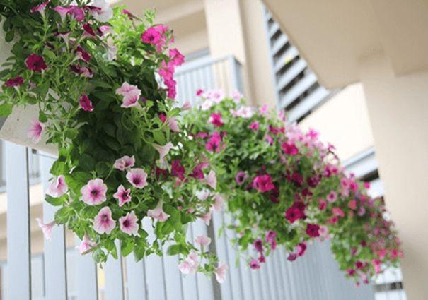 Loài hoa có ý nghĩa to lớn mang tên Dạ Yến Thảo