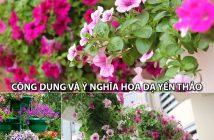 Công dụng và ý nghĩa hoa Dạ Yến Thảo
