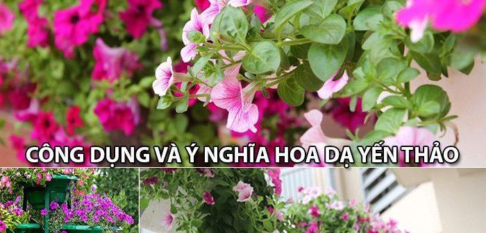 Công dụng và ý nghĩa hoa Dạ Yến Thảo – Shop hoa tươi Mrhoa