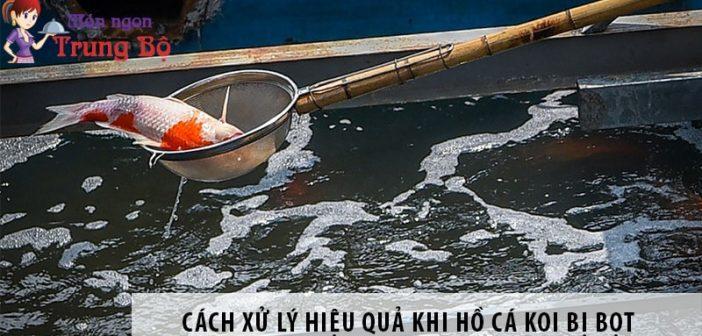 Cách xử lý hiệu quả khi hồ cá koi bị bọt