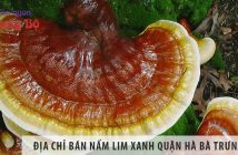 Địa chỉ bán nấm lim xanh quận Hà Bà Trưng - Hà Nội uy tín