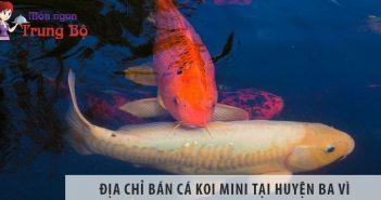 Địa chỉ bán cá koi mini đẹp, giá rẻ tại huyện Ba Vì