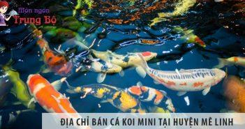 Địa chỉ bán cá koi mini đẹp, giá rẻ tại huyện Mê Linh